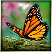 App Icon: Season Zen HD 1.9.1