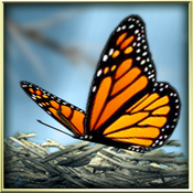 App Icon: Season Zen HD 1.8
