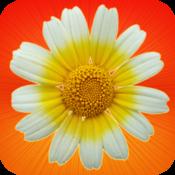 App Icon: 1000 Kräuter