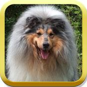App Icon: Collie Puzzle 6.0