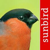 App Icon: Vogel Id – Gartenvögel Deutschland - Vögel Erkennen, Bestimmen und Zählen 8.03